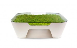 Sinkhole coffee table adds subtle moss décor to your home