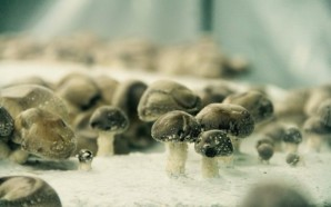 Mushrooms-La-Caverne