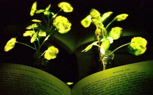 MIT Engineers Transform Plants Into Lights